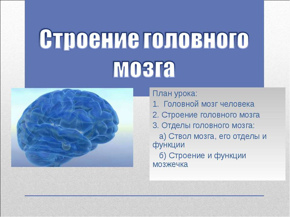 План урока: 1. Головной мозг человека 2. Строение головного мозга 3. Отделы г...