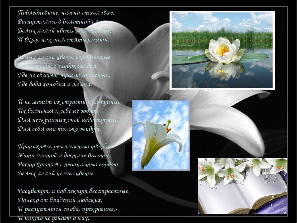 Побледневшие, нежно-стыдливые, Распустились в болотной глуши Белых лилий цвет...