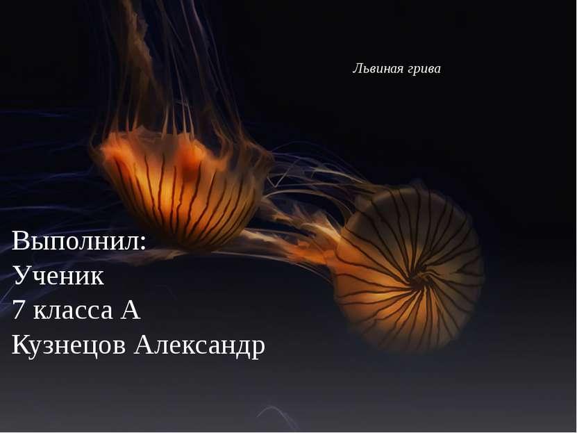 Львиная грива Выполнил: Ученик 7 класса А Кузнецов Александр