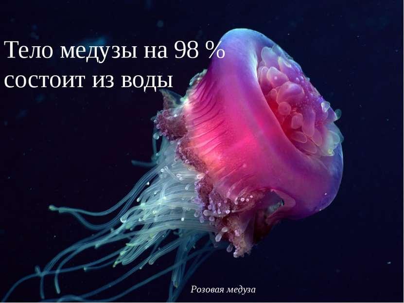 Розовая медуза Тело медузы на 98% состоит из воды