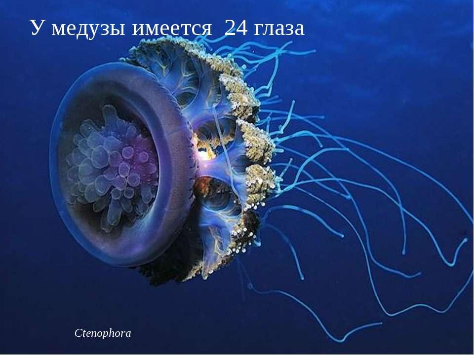 Ctenophora У медузы имеется 24 глаза