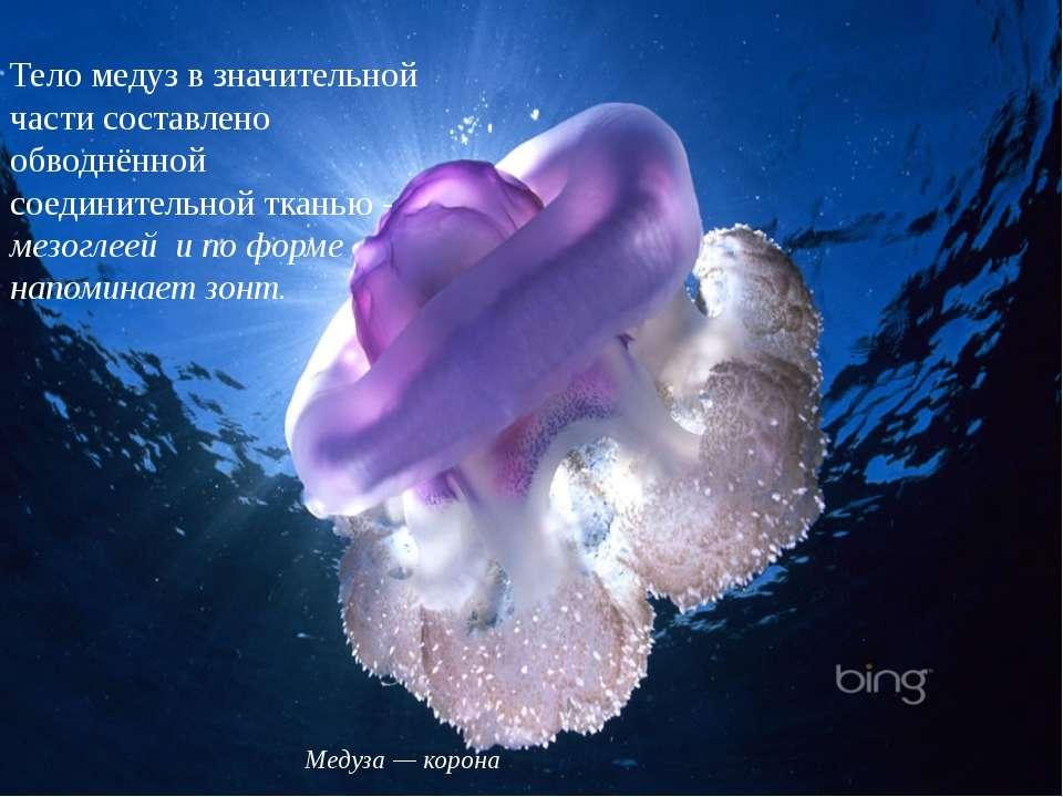 Тело медуз в значительной части составлено обводнённой соединительной тканью...