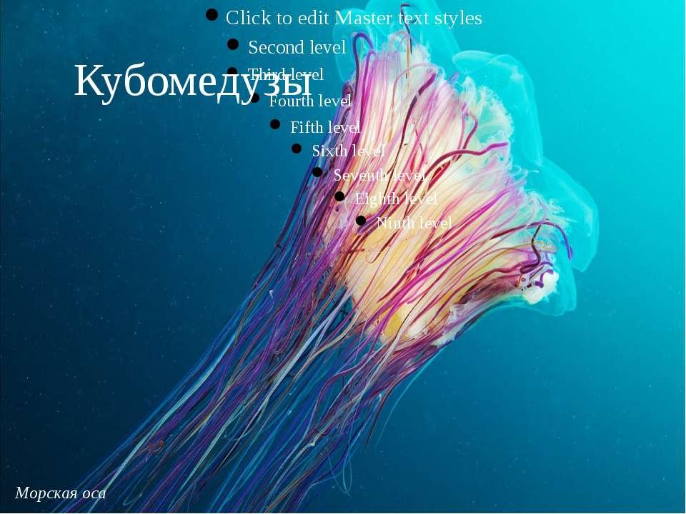 Морская оса Кубомедузы
