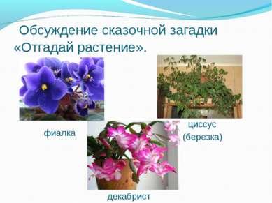 Обсуждение сказочной загадки «Отгадай растение». фиалка циссус (березка) дека...