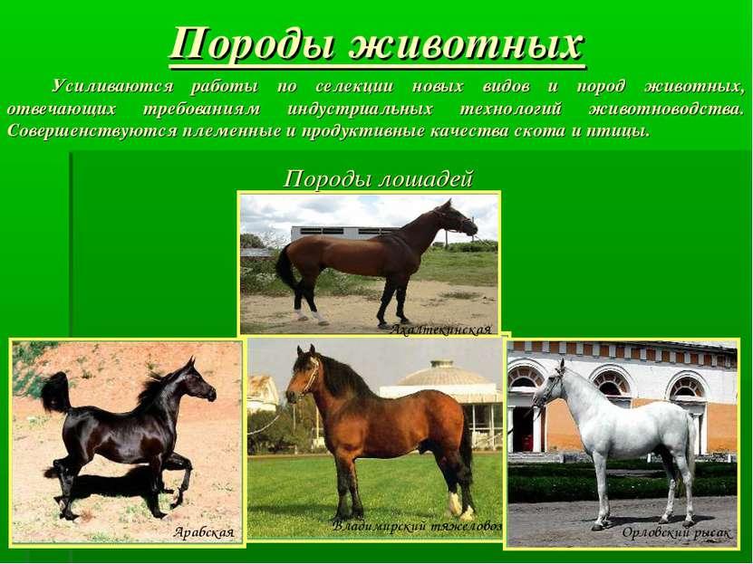Породы животных Породы лошадей Усиливаются работы по селекции новых видов и п...