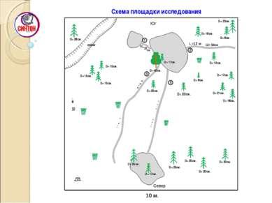 Схема площадки исследования