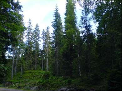Типичный внешний облик зоны - это хвойные деревья.