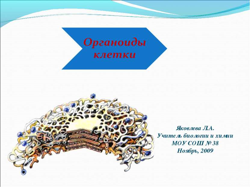 Яковлева Л.А. Учитель биологии и химии МОУ СОШ № 38 Ноябрь, 2009