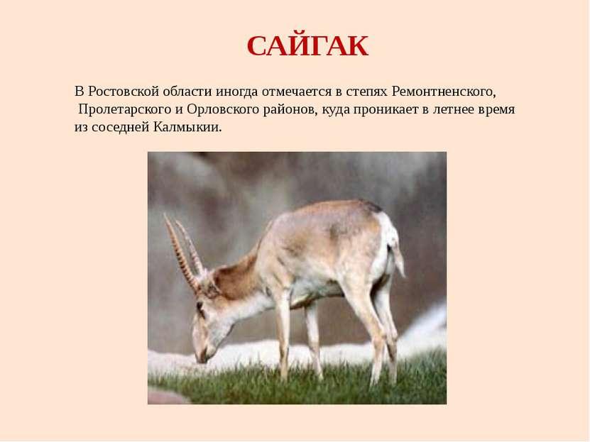 САЙГАК В Ростовской области иногда отмечается в степях Ремонтненского, Пролет...