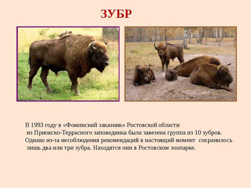 ЗУБР В 1993 году в «Фоминский заказник» Ростовской области из Приокско-Террас...
