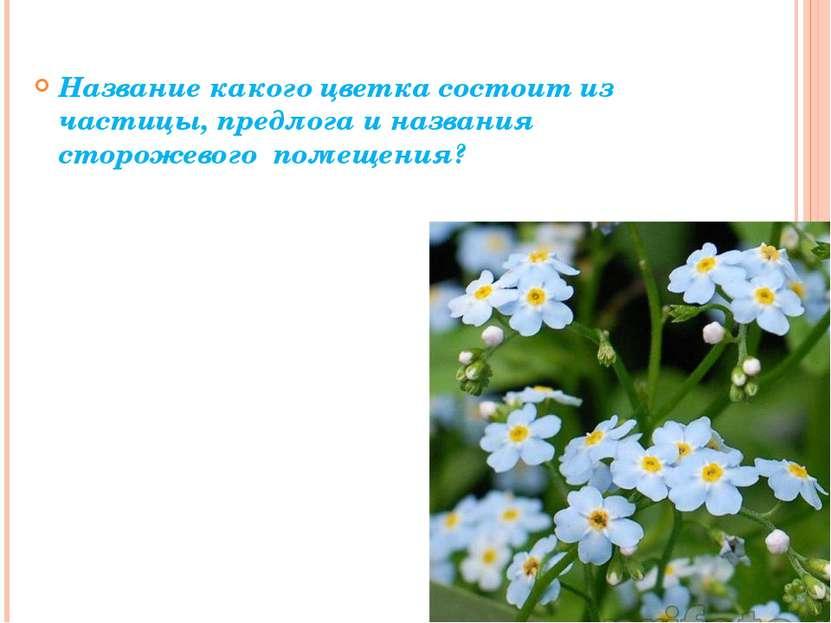 Название какого цветка состоит из частицы, предлога и названия сторожевого п...