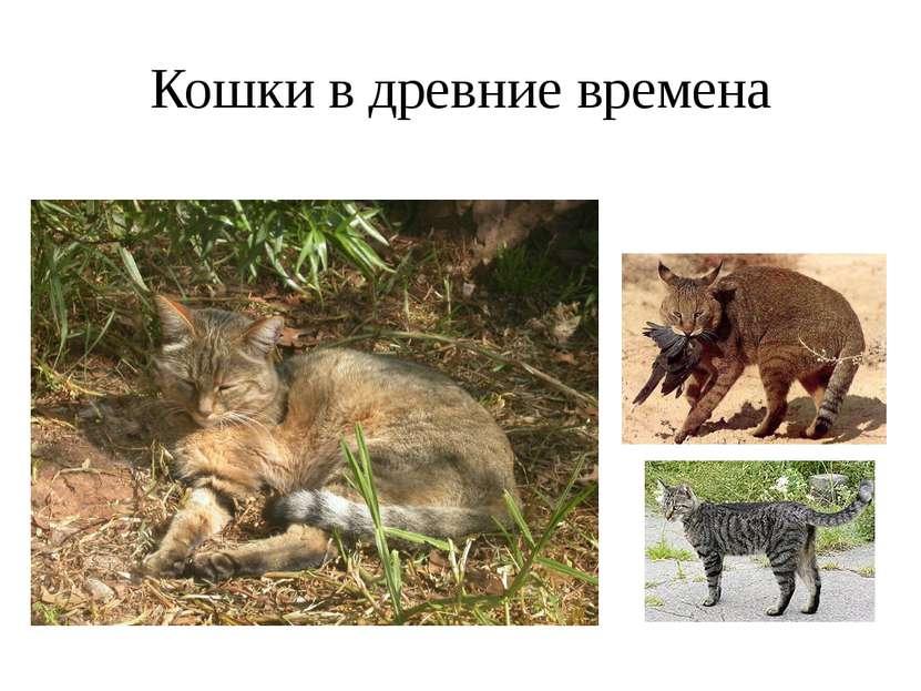 Кошки в древние времена