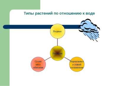 Типы растений по отношению к воде