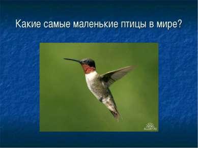 Какие самые маленькие птицы в мире?