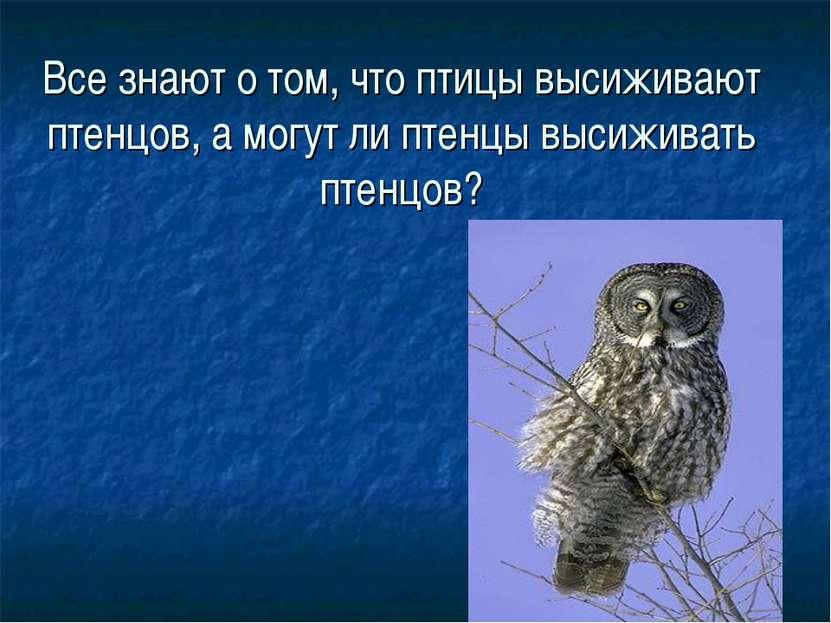 Все знают о том, что птицы высиживают птенцов, а могут ли птенцы высиживать п...