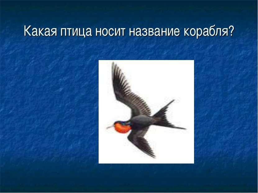 Какая птица носит название корабля?