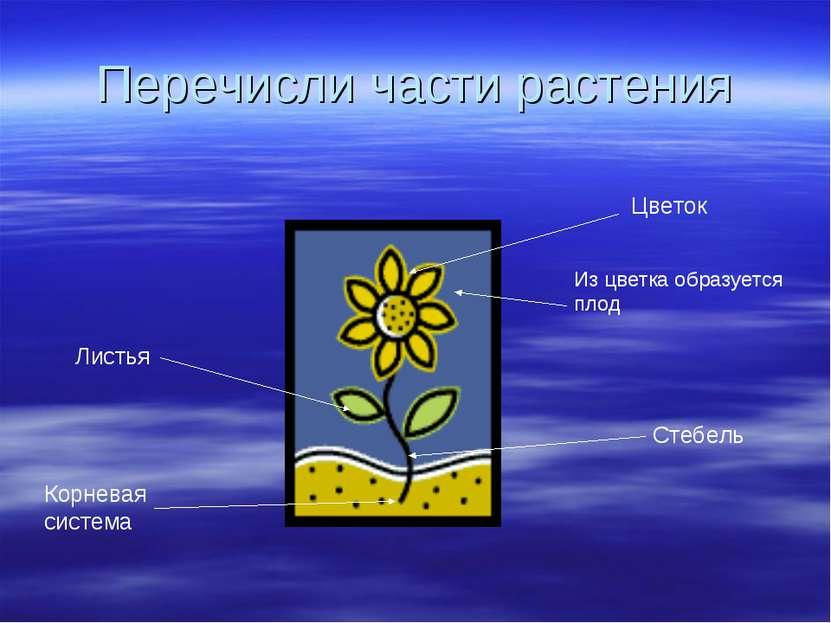 Перечисли части растения Цветок Из цветка образуется плод Листья Стебель Корн...