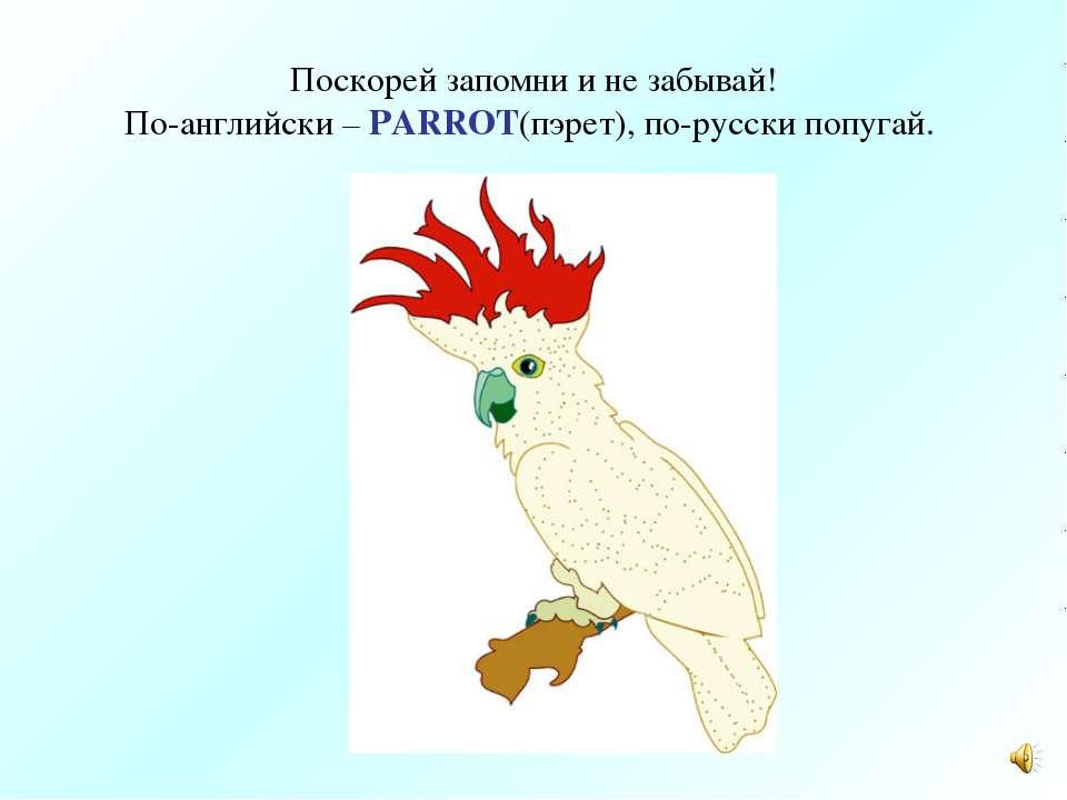 Поскорей запомни и не забывай! По-английски – PARROT(пэрет), по-русски попугай.