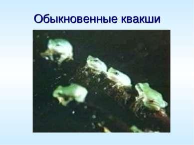 Обыкновенные квакши