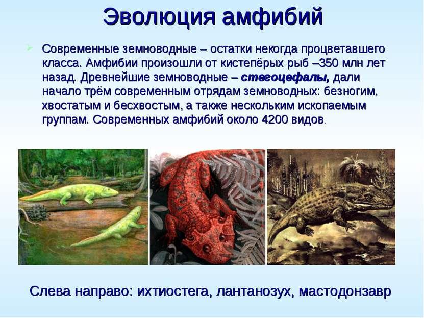 Эволюция амфибий Современные земноводные – остатки некогда процветавшего клас...