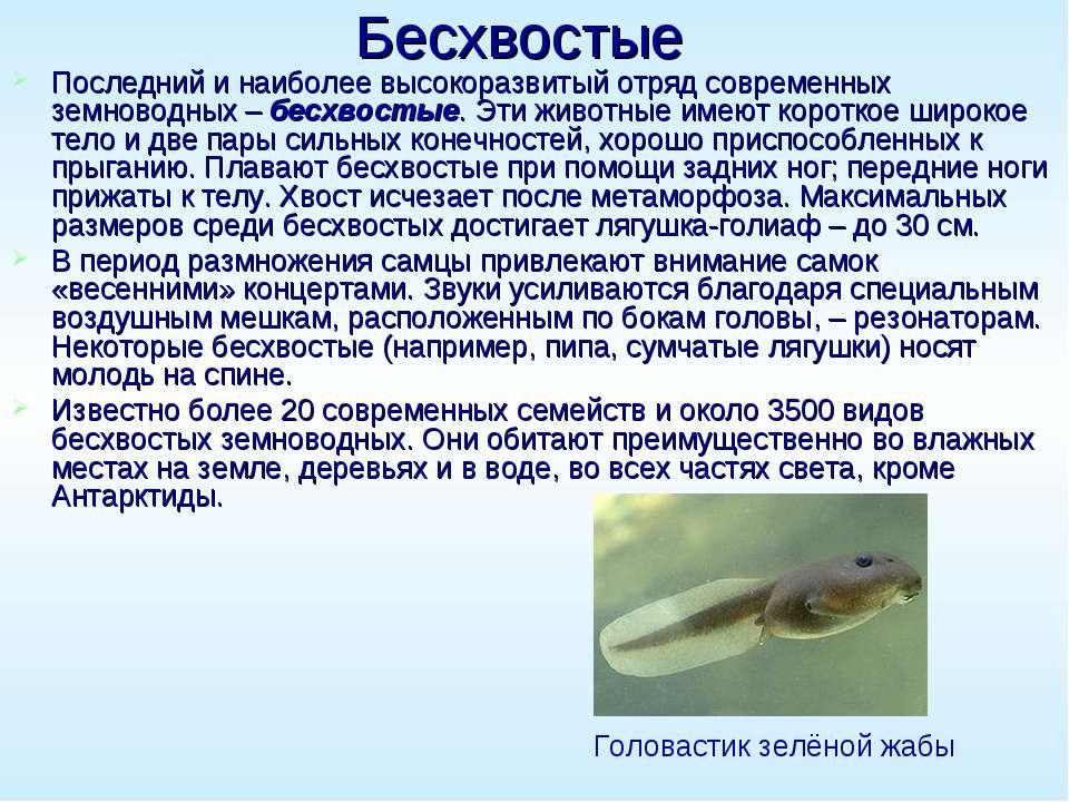 Бесхвостые Последний и наиболее высокоразвитый отряд современных земноводных ...