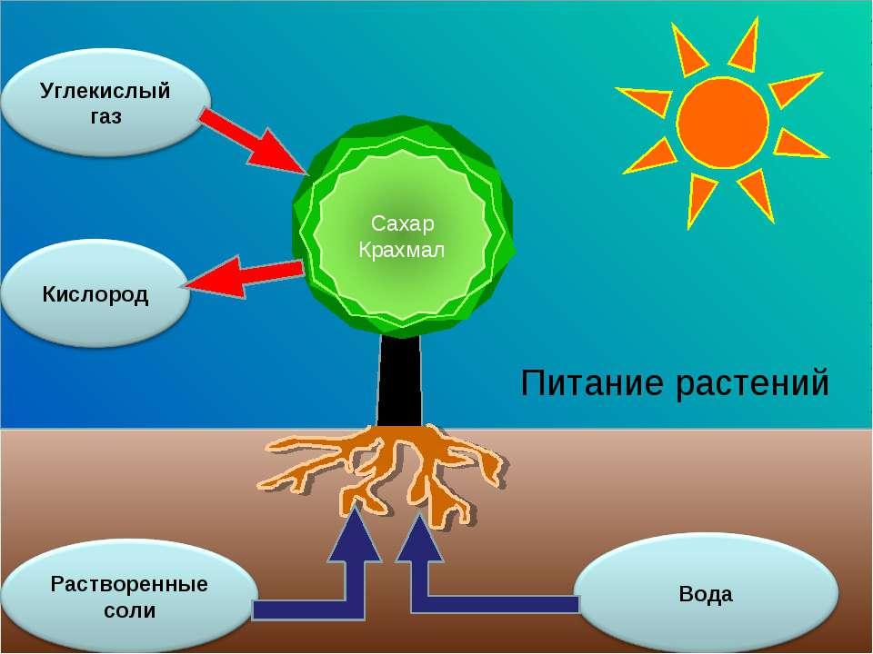 Питание растений