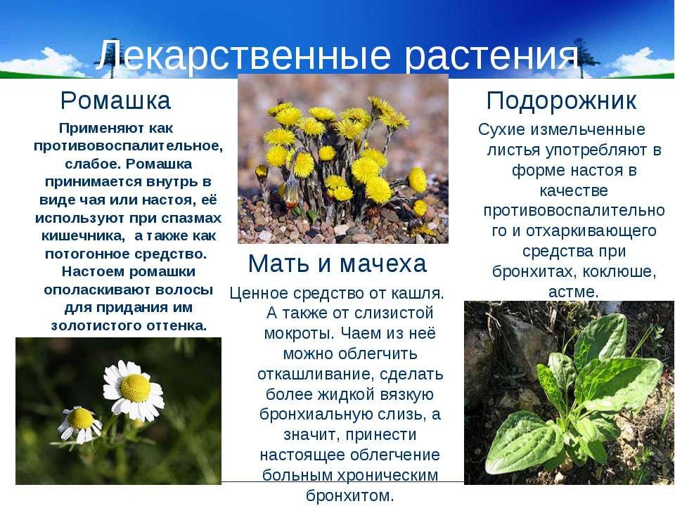 Лекарственные растения Мать и мачеха Ценное средство от кашля. А также от сли...