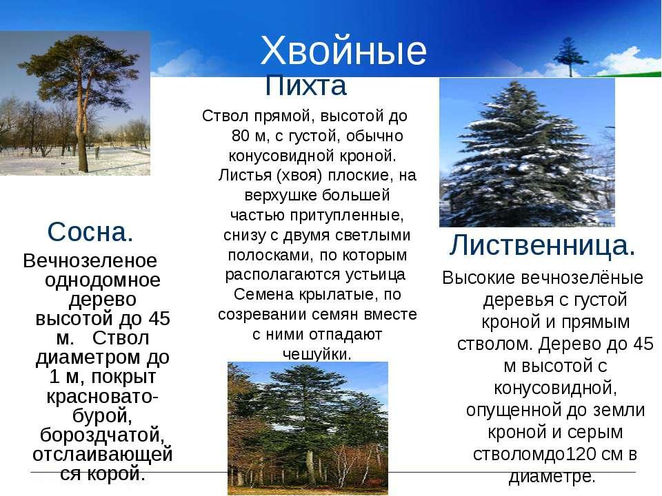 Хвойные Сосна. Вечнозеленое однодомное дерево высотой до 45 м. Ствол диаметро...
