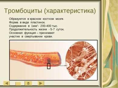 Тромбоциты (характеристика) Образуются в красном костном мозге. Форма в виде ...