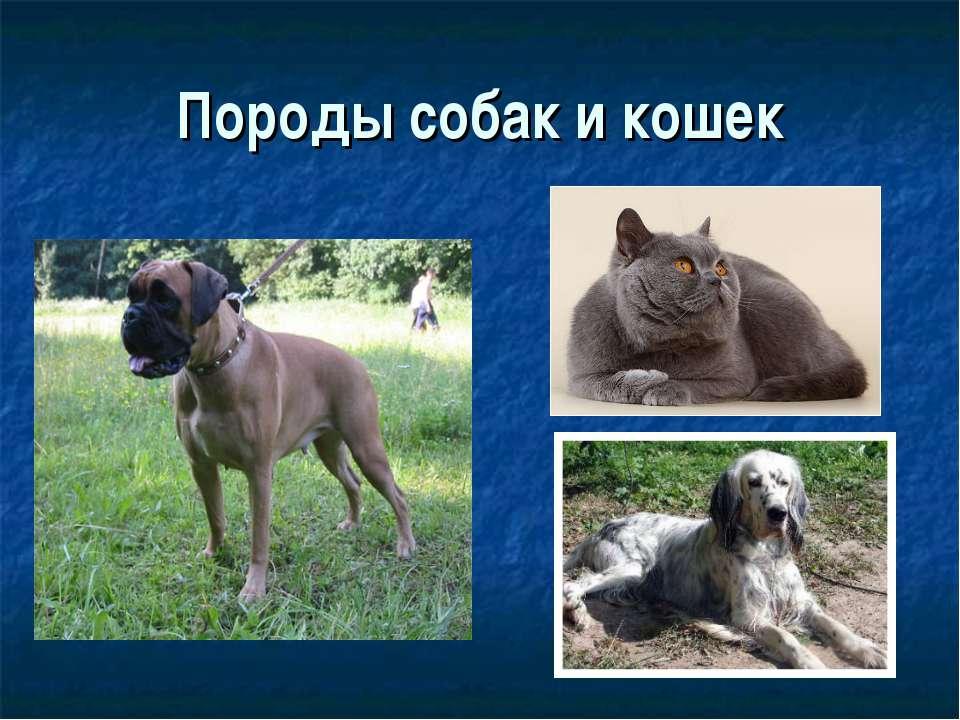 Породы собак и кошек