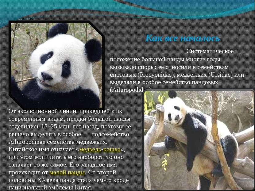 Как все началось Систематическое положение большой панды многие годы вызывало...