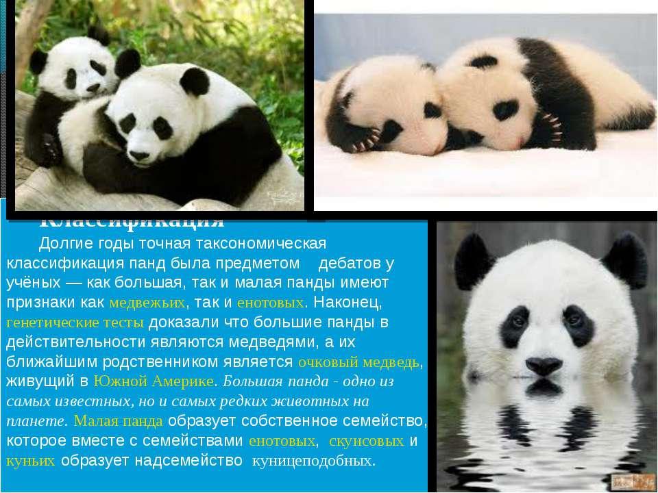 Классификация Долгие годы точная таксономическая классификация панд была пред...