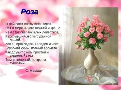 Роза О ней поют поэты всех веков. Нет в мире ничего нежней и краше, Чем этот ...