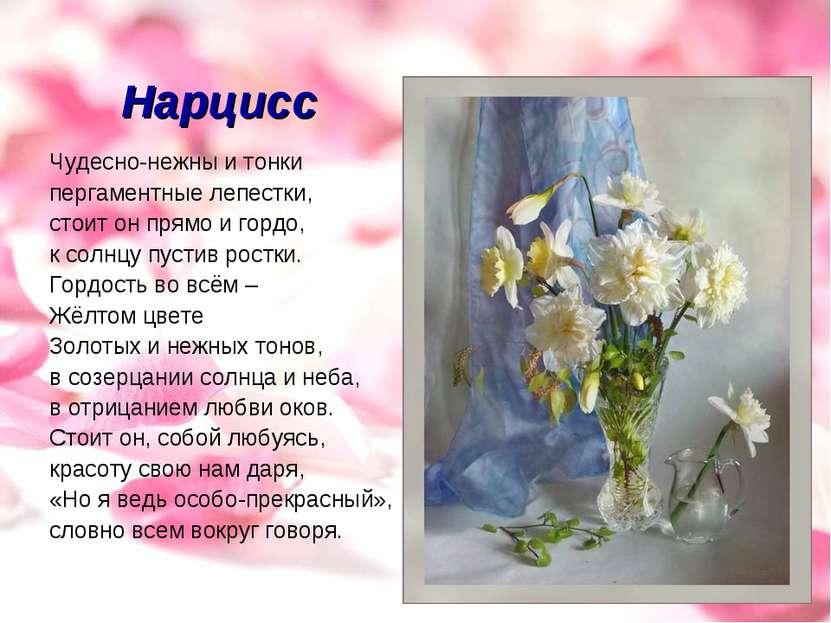 Нарцисс Чудесно-нежны и тонки пергаментные лепестки, стоит он прямо и гордо, ...