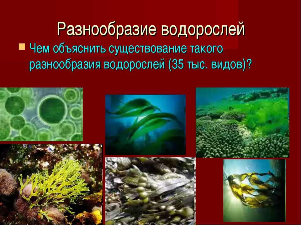 Разнообразие водорослей Чем объяснить существование такого разнообразия водор...