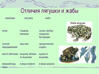 Отличия лягушки и жабы признаки лягушка жаба кожа гладкая, влажная сухая, гру...