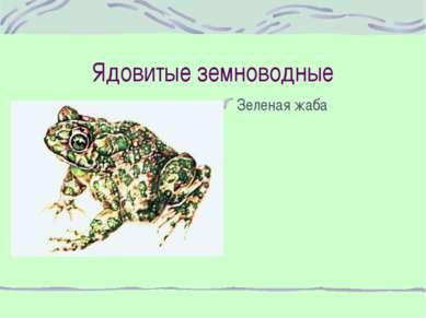 Ядовитые земноводные Зеленая жаба