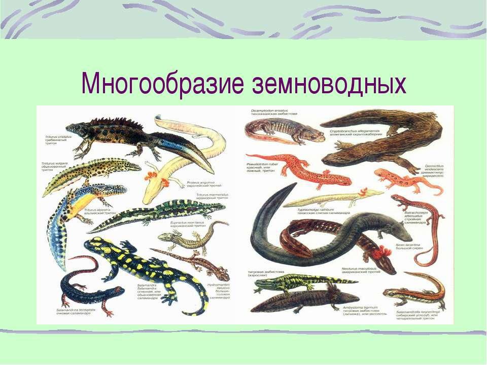 Многообразие земноводных