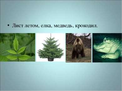Лист летом, елка, медведь, крокодил.