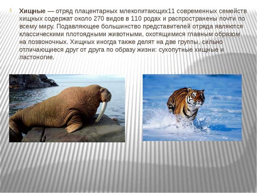 Хищные— отрядплацентарных млекопитающих11 современных семейств хищных содер...