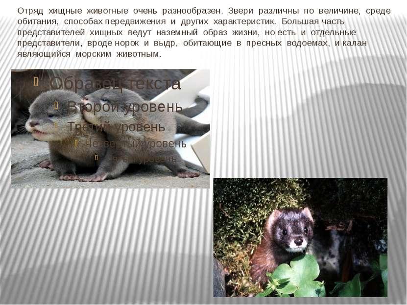 Отряд хищные животные очень разнообразен. Звери различны по величине, среде ...