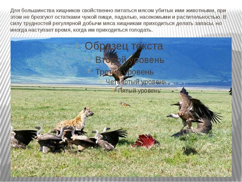 Для большинства хищников свойственно питаться мясом убитых ими животными, при...