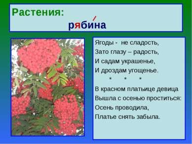 Растения: рябина Ягоды - не сладость, Зато глазу – радость, И садам украшенье...