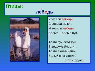 Птицы: лебедь Улетали лебеди С севера на юг. И теряли лебеди Белый – белый пу...