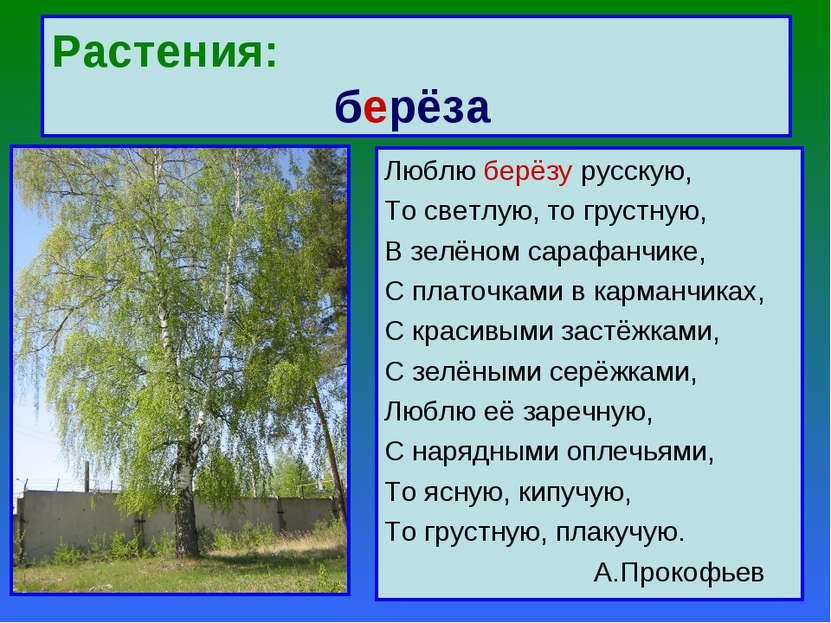 Растения: берёза Люблю берёзу русскую, То светлую, то грустную, В зелёном сар...