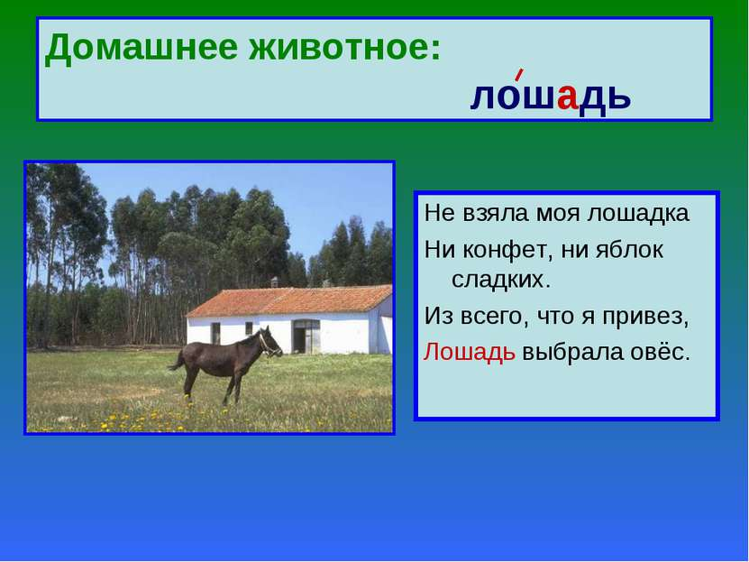 Домашнее животное: лошадь Не взяла моя лошадка Ни конфет, ни яблок сладких. И...