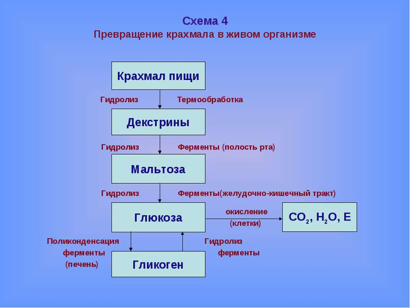 Схема 4 Превращение крахмала в живом организме Гидролиз Термообработка Гидрол...