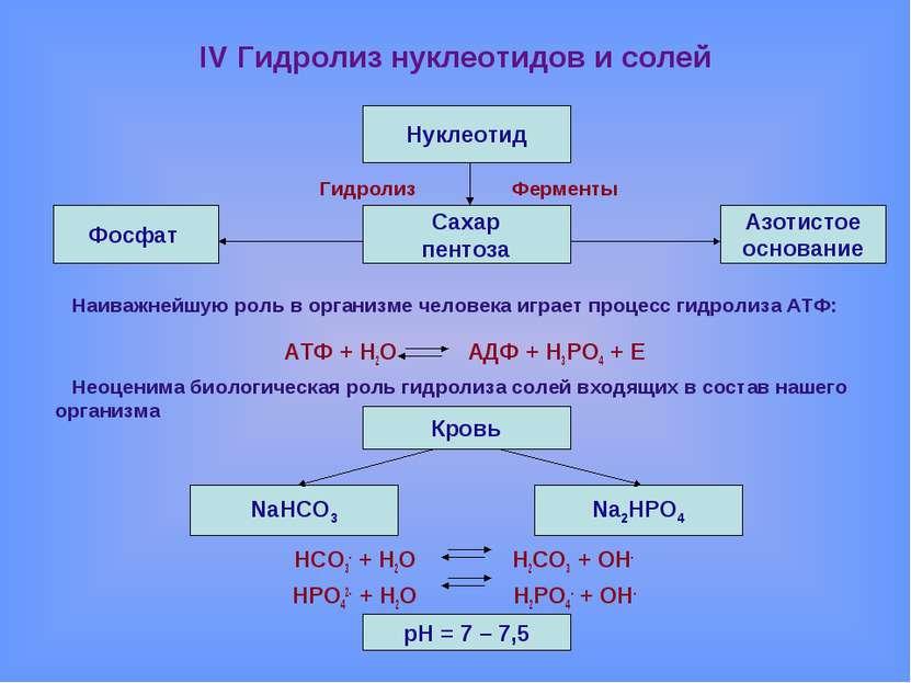 IV Гидролиз нуклеотидов и солей Гидролиз Ферменты Наиважнейшую роль в организ...
