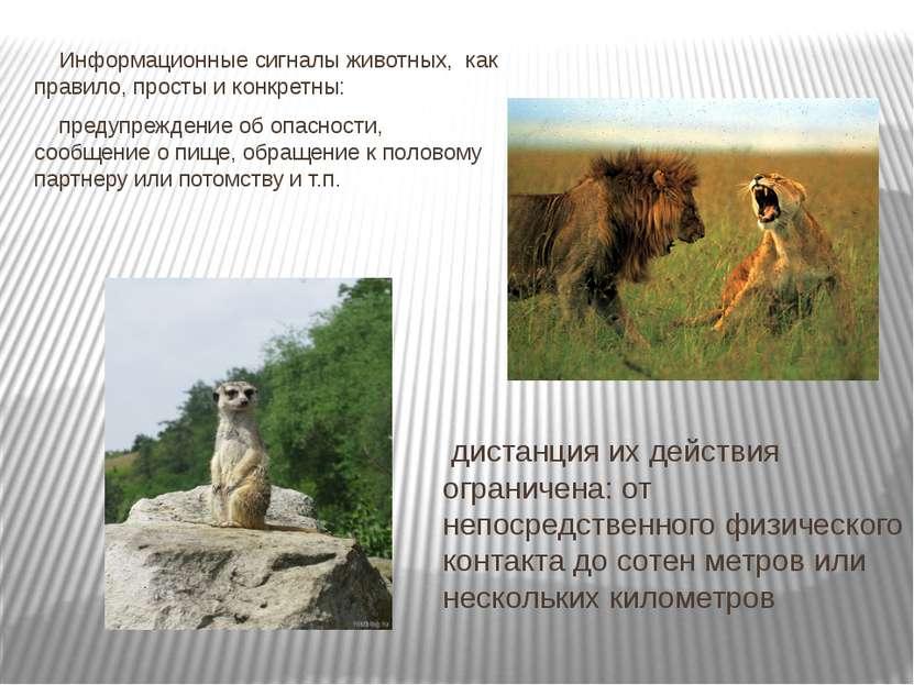 Информационные сигналы животных, как правило, просты и конкретны: предупрежд...