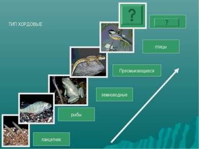 ланцетник рыбы земноводные Пресмыкающиеся птицы ТИП ХОРДОВЫЕ